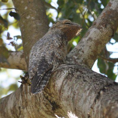 especies-fauna-pantanal