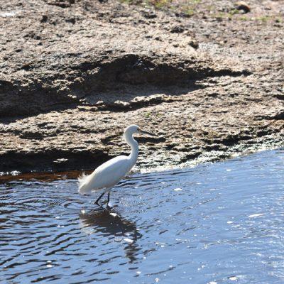 vida-aves-pantanal
